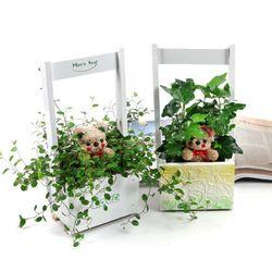 토피어리 바구니 - 로맨틱프로포즈 (공기정화식물+토피어리)