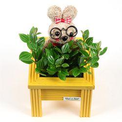예쁜 토피어리 미니화분 - 온리유 (공기정화식물+토피어리)