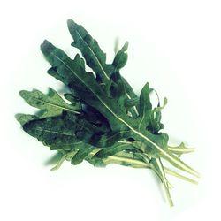 루꼴라씨앗-일반채소