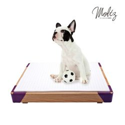 몰츠 천연라텍스 PET BED - purple