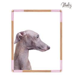 몰츠 천연라텍스 PET BED - pink