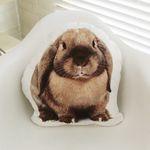 Momo Rabbit