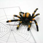 더웹거미카드+거미[the Web]