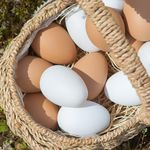 달걀(5개입)