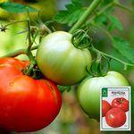 러브리256 토마토 씨앗 (20립)