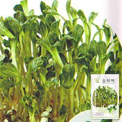 홍화 새싹 씨앗 (25g)