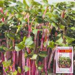 홍빛열무 새싹 씨앗 (30g)