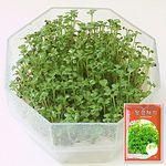 청경채 새싹 씨앗 (30g)