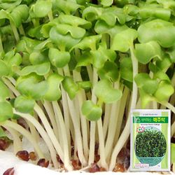 배추 새싹 씨앗 (30g)
