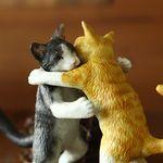 포옹하는 고양이들