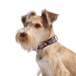 원더우먼 Dog Collar^ L(메탈)