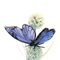 6552번 나비 Blue Butterfly13cm.L