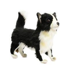 6505번 치와와 Chihuahua Black Standing