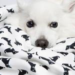 반려동물 전용 타월 - 펫치타월(Medium)