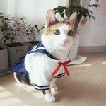 Miyopet 고양이옷 강아지옷 교복 원피스