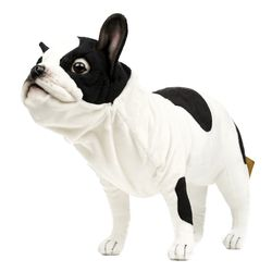 6601번 프렌치 불독 French Bulldog Black & White