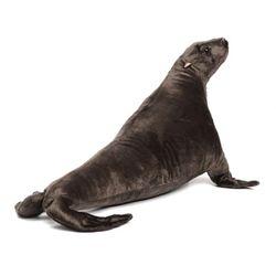 6657번 바다사자 Sea Lion70cm.L