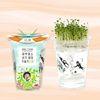 한컵새싹농장 - 다채키우기