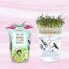한컵새싹농장 - 알팔파키우기