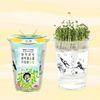 한컵새싹농장 - 유채키우기