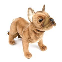 6597번 프렌치 불독 French Bulldog Standing