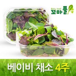 새싹 베이비채소 4주 [100g(하루두끼) 16팩]