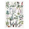 [포스터 중형] 보타니컬 아트 플랜트A 식물 그림