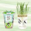 한컵새싹농장 - 밀싹키우기