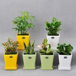 [행복한세상]공기정화식물 컬러화분6P세트