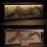 틸로사우루스 화석 액자