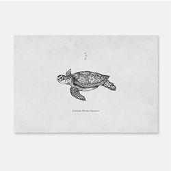 바다동물 포스트카드