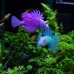 실리콘 인조물고기 라이온피쉬 /형광색상 수조 장식품