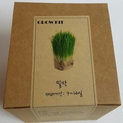 새싹채소 GROW KIT(밀)