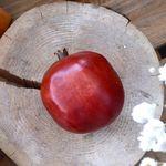 석류 (대)- FMWX141332