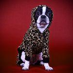 레오파드 스웨그 올인원 (베이지) 강아지옷