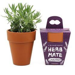 내 곁의 반려식물 허브메이트 - 라벤더