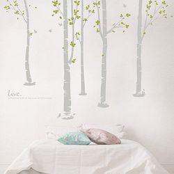 자작나무숲 DM