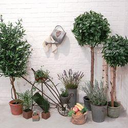 150CM 월계수 나무 포트 FMNA126420