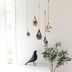 에어팟+공기정화식물 세트