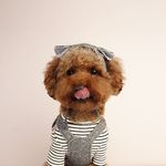 My Dogs Bonnet Charcoal