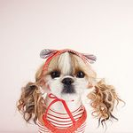 My Dogs Bonnet Cherry Red