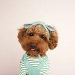 My Dogs Bonnet Mint Green