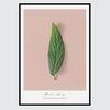 식물 힐링 디자인 알루미늄 액자-그린리프 (A4)