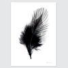모던 블랙화이트 인테리어 포스터-feather(A3)