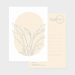 drawing postcard - peace lily