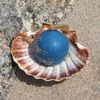 A PEARL IN THE SHELL ( cerulean blue )