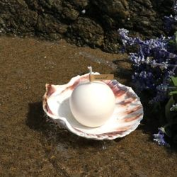 A PEARL IN THE SHELL ( ivory )