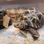 마그넷 PET BANK 스타 거북이