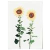 패브릭 포스터 F046 풍수지리 꽃 해바라기 [대형]