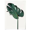 패브릭 천 포스터 F058 식물 몬스테라 no.1 [중형]